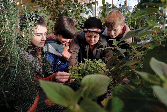 group of four grade-school-aged kids examining different plants in a greenhouse