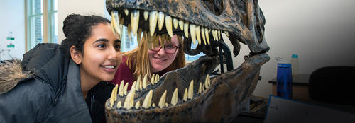 two young women inspect the scull of a dinosaur skull that looks like a T Rex