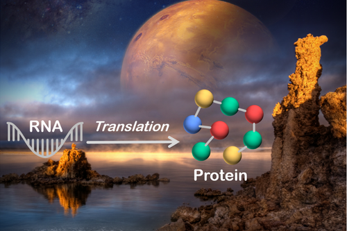 Graphic showing RNA translation to protein