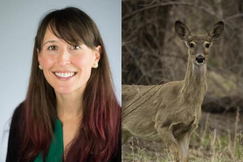 Tiffany Wolf (left), Deer in woods (right)
