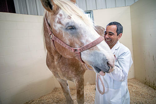 Dr Guedes wearing white lab coat with a horse patient
