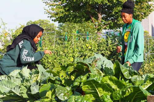 Leensa Ahmed and Jasmine Salter tend to produce for the Green Garden Bakery.