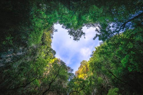 A forest, as seen looking up from the ground. An opening in the tree forms a heart shape