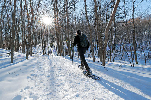 man snowshoeing at Arboretum among trees