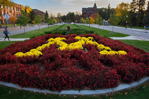 A bed of Maroon and Gold flowers, meticulously landscaped to show a Gold Block M on a Maroon backdrop, welcomes visitors to the University's Twin Cities campus as the drive past the gates at 15th and University  Avenues